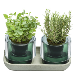 Bitkilerin Ömrünü Uzatan Tasarım; 'Roots'
