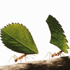 Mahmut Şenol Söyleşisi: İnsan Devleti & Karınca Kolonisi