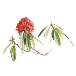 Kış Bahçesi Programları: Bir Bitki Ressamının Hikâyesi