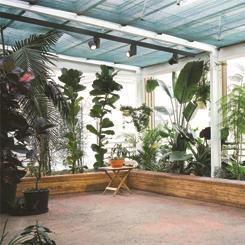 Kış Bahçesi Programları: Bitki Takası