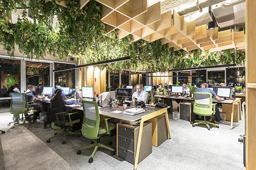 Biyofilik Ofis Tasarımı