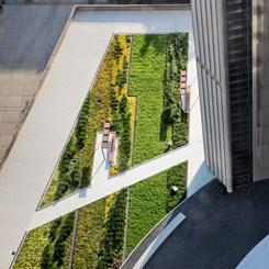 Toronto, Yeşili Çatılara Taşı(r)dı