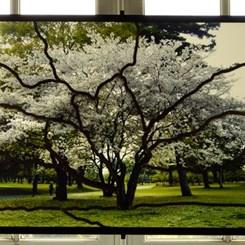 Türkiye Pavyonu Venedik Bienali'ne Sarkis'in Eserleriyle Katılıyor