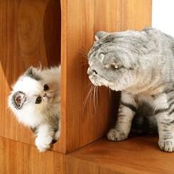 Kedi-dostu Çalışma Masaları: CATable