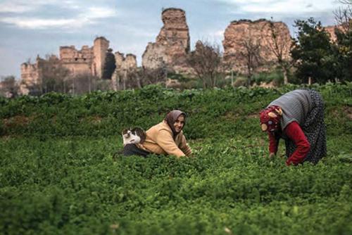 Yedikule Bostanları Tarihi, Kültürel Mirasımızdır!