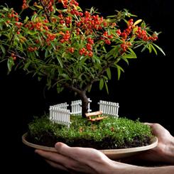 Minyatür Harikalar Atölyesi: Paspas'ın Bahçeleri