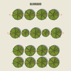 Peyzaj Tasarımında 4 Farklı Ağaç Yerleşimi