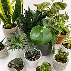 Plantbox: Doğa ve Şehir Arasında