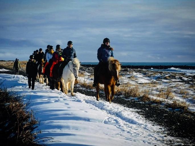 Myrdalshreppur, İzlanda atları