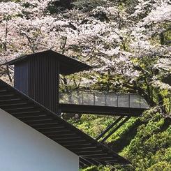 Bambuyla Çevrili Bir Müze