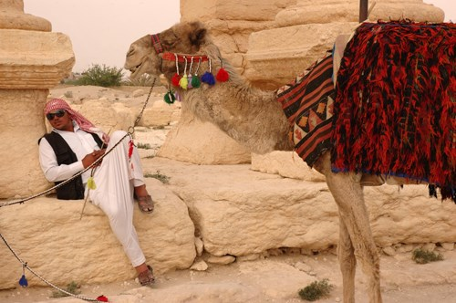 Palmyra Antik Kenti'nde müşteri bekleyen deveci